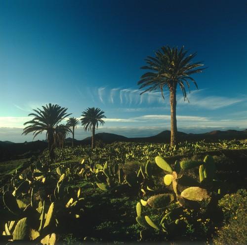 Lanzarote-08-BG13.1475231510.57ee3f16ee697.jpg